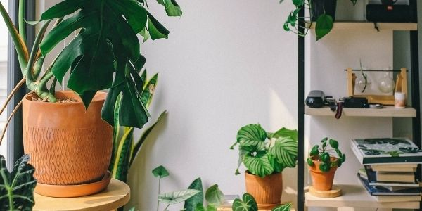 15 house plants that are good for the elderly to have in their homes