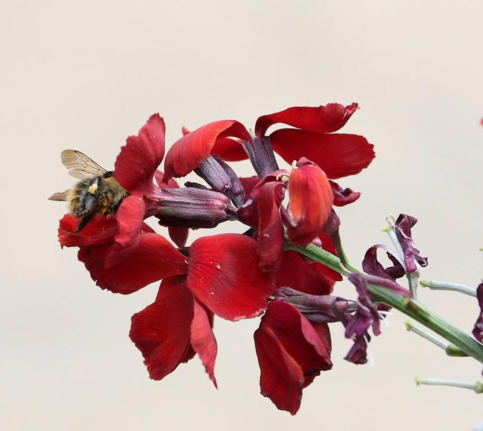 Luke Haigh Bee Photograph