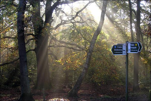 ecclesall-woods