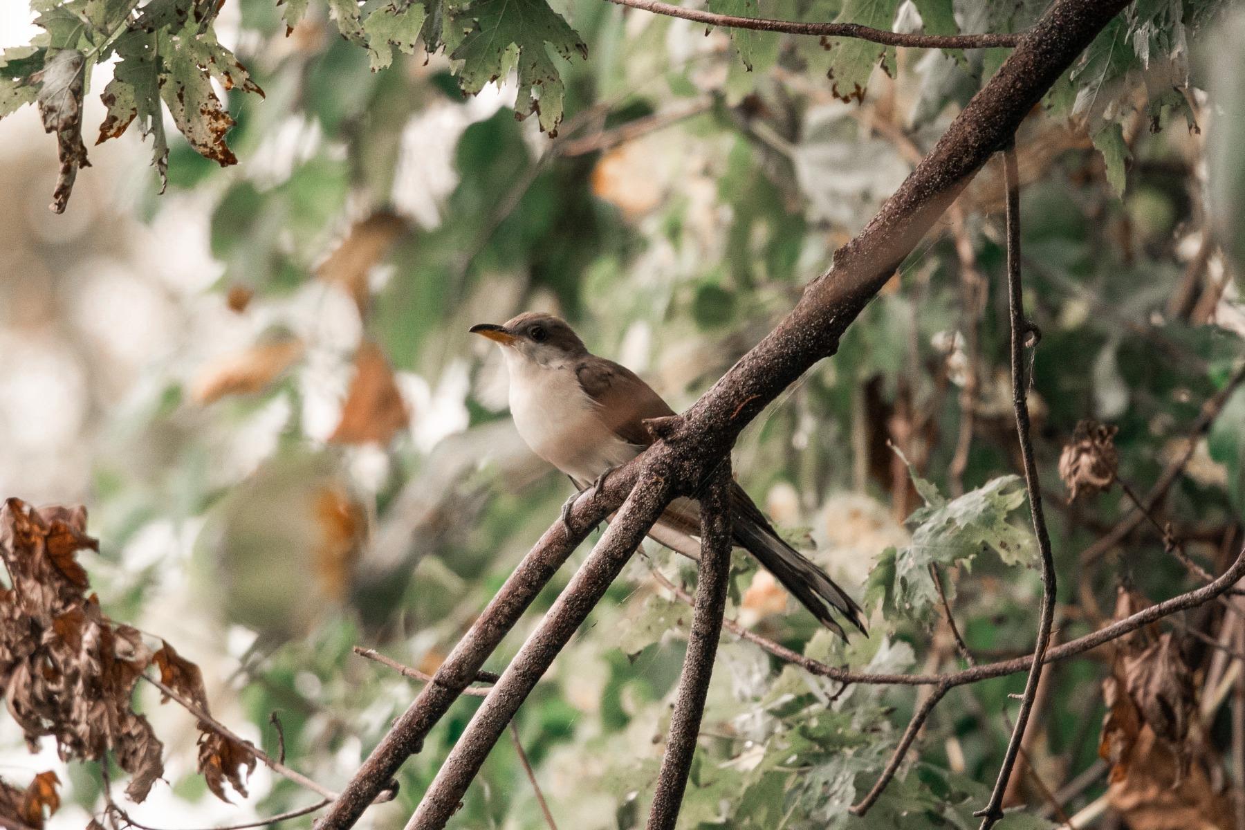 Bird watching hobby
